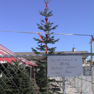 Our tallest, skinniest tree ever!!  Ended up in a bidding war!!